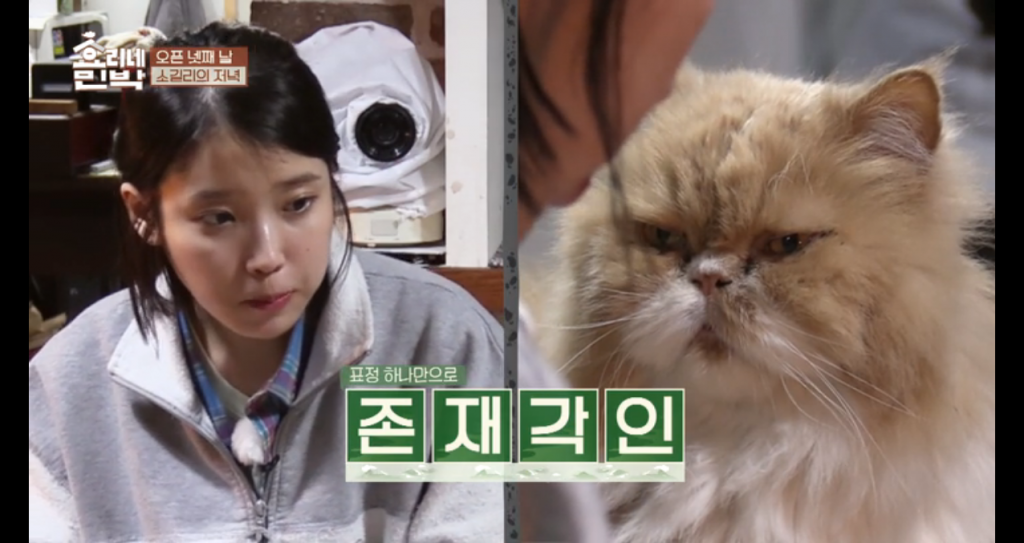 IU and cat Hyori's Bed and Breakfast